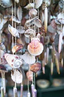 Free Sea Shells Royalty Free Stock Photos - 27806438
