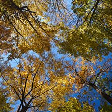 Free Bright Autumn Forest Stock Image - 27806681