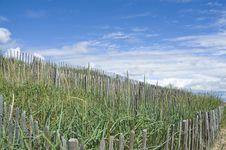 Free Sand Dune Restoration Royalty Free Stock Photo - 27809615