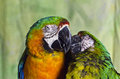 Free Two Colourful Macaw Parrots Kissing Royalty Free Stock Image - 27810446