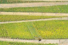 Free Vineyard In Rhineland Stock Photography - 27819362