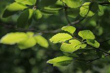 Free Autumn Greens Stock Image - 27830751