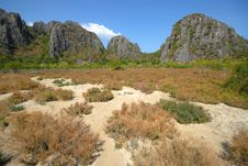 Suaeda Maritima Field. Stock Images