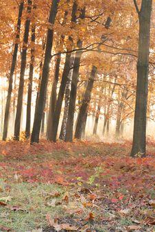 Free Orange Oak Forest, Autumn Royalty Free Stock Photography - 27831917
