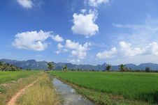 Free Green Rice Field And Small Agricultural Canal Stock Photo - 27832370