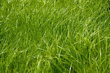 Free Background Of Fresh Green Grass Stock Photography - 27835462