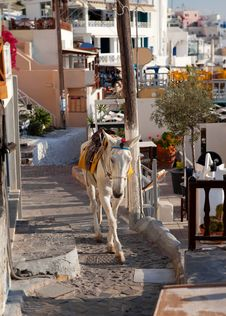 Free Donkey Stock Photos - 27848673