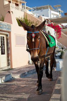 Free Donkey Royalty Free Stock Image - 27848686