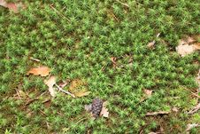 Free Forest Moss Background Royalty Free Stock Image - 27849756