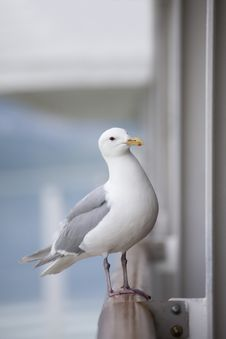 Free Seagull On Railing Stock Images - 27856424