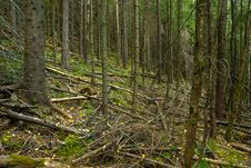 Free Mountain Forest After Hurricane Stock Image - 27856961
