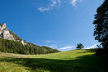 Free Meadow With Lonely Tree Royalty Free Stock Images - 27875799