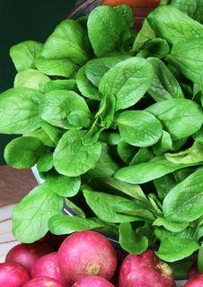Free Corn Salad Stock Image - 27881021