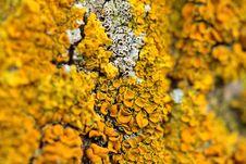 Free Closeup Of A Yellow Mushroom Stock Photo - 27882850