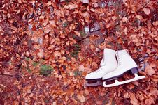 Free Old Ice Skates In Autumn Stock Photos - 27886623