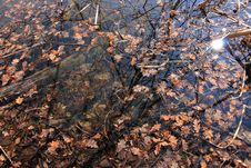 Free Autumn Leaves On The Surface Of The Water Royalty Free Stock Images - 27888679