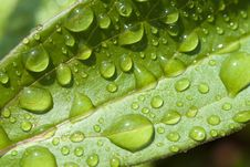 Background With Rain Drops Royalty Free Stock Photo