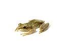 Free Tree Frog Stock Photos - 27899103