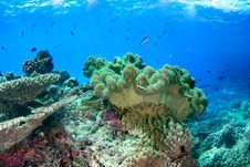 Underwater Seascape With Soft Coral Royalty Free Stock Images