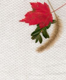 Free Fall Fabric Royalty Free Stock Photo - 27892805