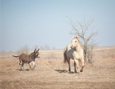 Free Donkey Chasing Horse Stock Photos - 27898053
