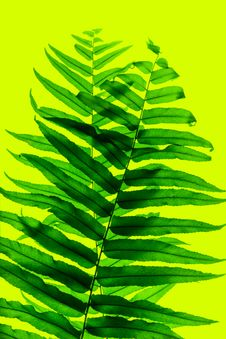 Free Fern Leaf Stock Image - 27898501