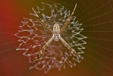 Free Tiny Garden Spider Stock Photos - 27899503