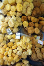 Free Sponges Stock Photography - 2797112