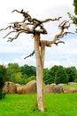 Free The Crooked Tree. Stock Photos - 2798823