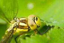 Free Green Dragonfly On Leave Close Stock Images - 2790004