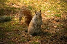 Friendly Squirrel Royalty Free Stock Images