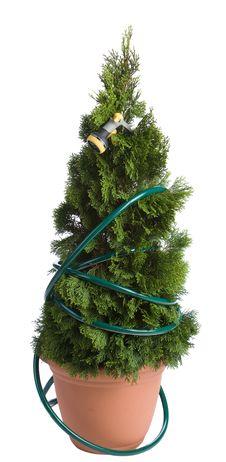 Free Cedar Tree Royalty Free Stock Image - 2791156