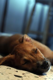 Free Brown Puppy Sleeping Royalty Free Stock Photography - 2794047