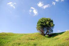 Free Solitary Tree Stock Photo - 2794250