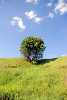 Free Solitary Tree Stock Photography - 2794252