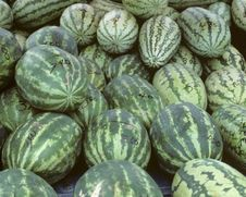 Bunch Of Watermelons Royalty Free Stock Images