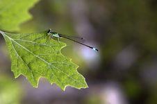 Free Dragonfly Stock Photo - 27901800