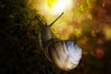 Free Snail Stock Photos - 27902053