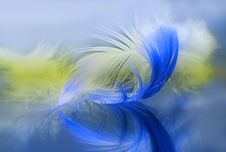 Free Feathers Royalty Free Stock Photography - 27902127