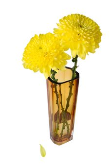 Free Two Flowers In A Glass Vase Stock Images - 27906784