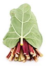 Free Rhubarb Stalks. Royalty Free Stock Image - 27912576
