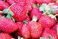 Free Fresh Strawberry Royalty Free Stock Photos - 27918288