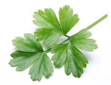 Free Parsley. Stock Photos - 27912143