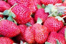 Free Fresh Strawberry Royalty Free Stock Photos - 27918288