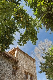 Free Pear Trees Around The Folk House Stock Photos - 27919063