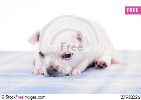 Free Paulo Royalty Free Stock Image - 27928226