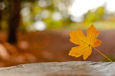 Lonely Autumn Leaf Stock Photo