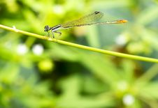 Free Close Up Green Dragonfly Stock Photos - 27929383