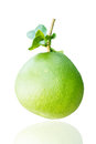 Free Green Pomelo Fruit Royalty Free Stock Images - 27935909