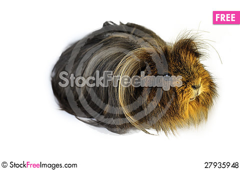 Free Pet Royalty Free Stock Photos - 27935948